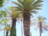 Palm Trees in Gerani